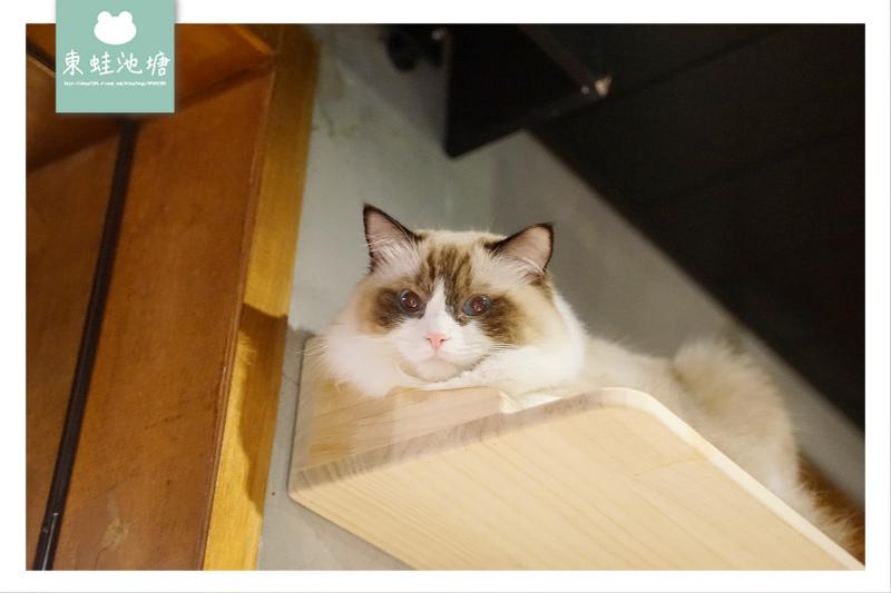 【台北貓咪餐廳推薦】無國界餐酒館 防疫除味清味門 醉貓 Drunk Cat 餐酒