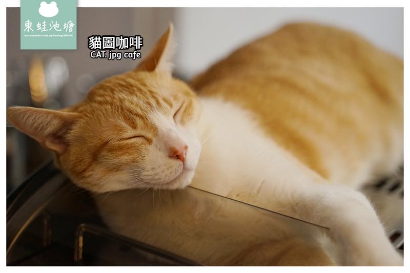 【台北貓咪咖啡館推薦】師大下午茶好選擇 超可愛店貓貝貝 貓圖咖啡 CAT. jpg cafe