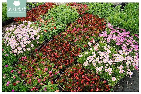 【桃園大溪免費景點推薦】免費入園花園農場 超實惠花草盆栽 天御花園