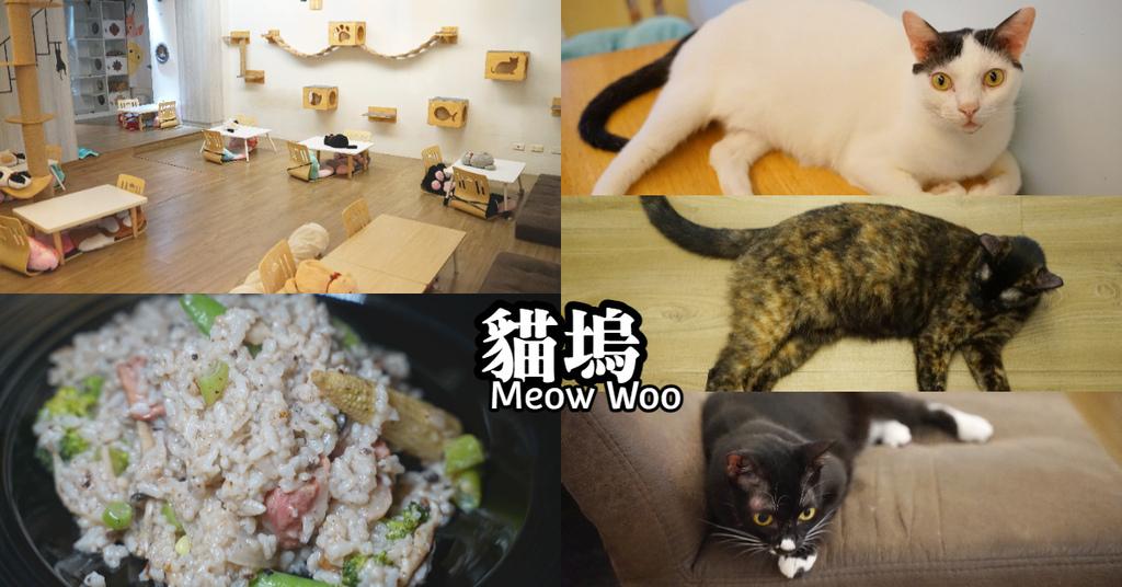【中原大學寵物餐廳推薦】柏德社區內貓咪咖啡廳 不限時飲料無限暢飲 貓塢 Meow Woo 貓咪咖啡館