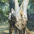 05.巨木  2010   水彩  38x54cm