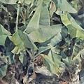 大地觀物23 2012 38x54--農家樂 No.2