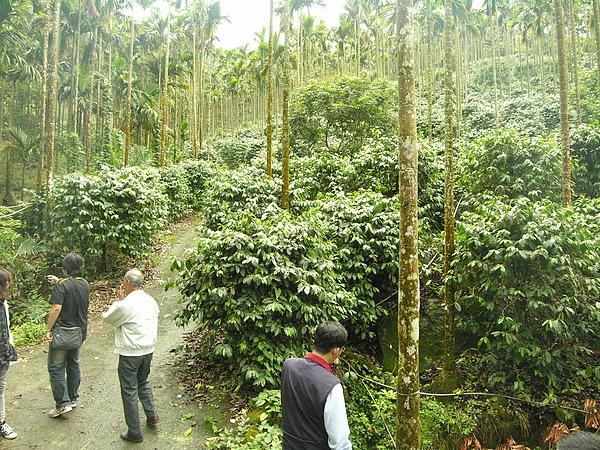 20100430東山自然休閒步道首次勘查 (9).JPG