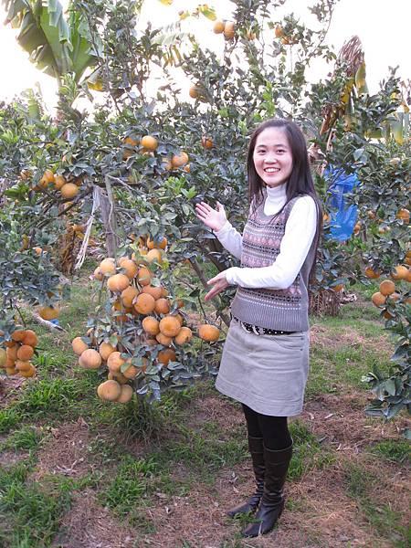 來介紹一下我阿公的橘子