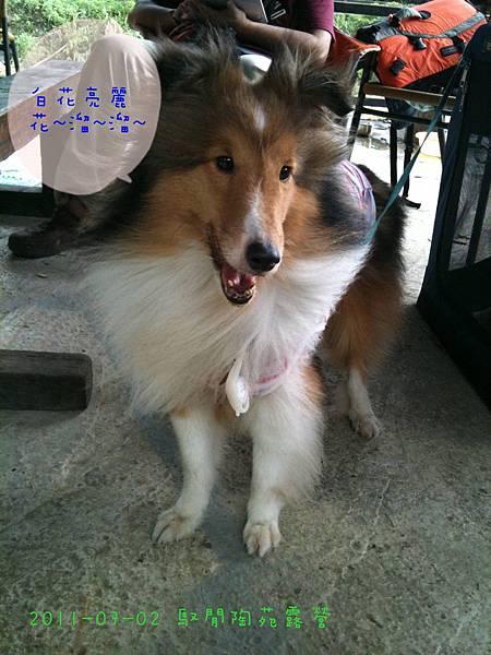 2011-07-02 馭閒陶苑露營-32.jpg