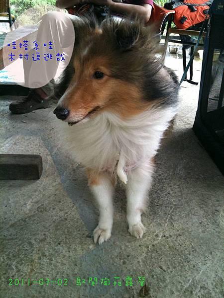 2011-07-02 馭閒陶苑露營-33.jpg