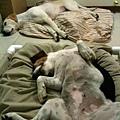 2011-09-17 那一年我們一起扁過的狗-18.jpg