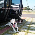 2011-09-17 那一年我們一起扁過的狗-1.jpg