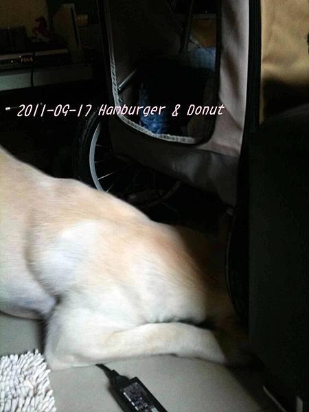 2011-09-17 那一年我們一起扁過的狗-3.jpg