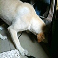 2011-09-17 那一年我們一起扁過的狗-2.jpg