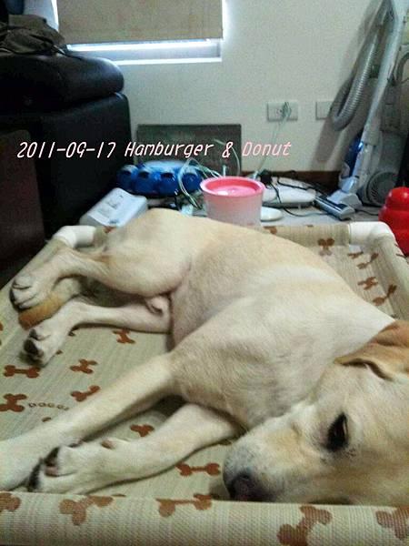 2011-09-17 那一年我們一起扁過的狗-5.jpg