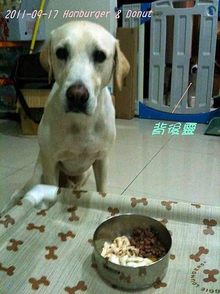 2011-09-17 那一年我們一起扁過的狗-10.jpg