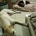 2011-09-17 那一年我們一起扁過的狗-16.jpg