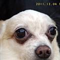 2011.12.04綠風-5.jpg