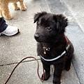 2012.03.04 Sofydog go shopping-4