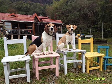 2012.12.16-三峽216 咖啡莊園-28