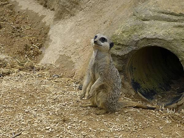 zoo 075