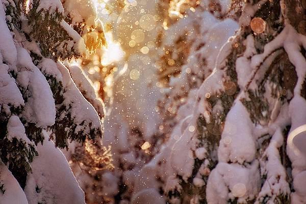 sparklinglight.jpg