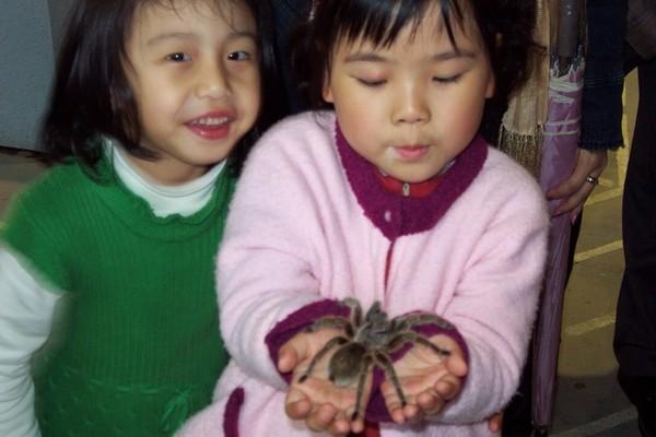 大蜘蛛喔!我不怕!