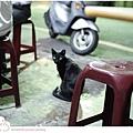 街貓-1.jpg