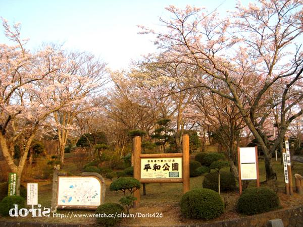充滿櫻花樹