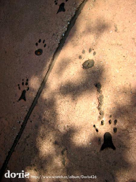 地上有小腳印