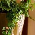 書櫃上的綠色植物