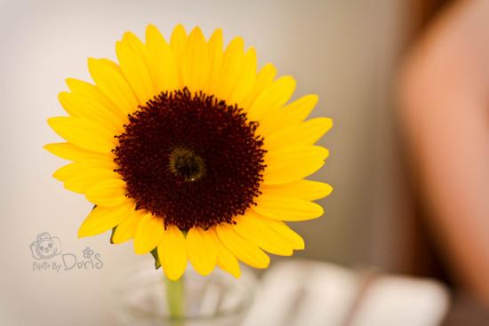 迎接我們上桌的向日葵