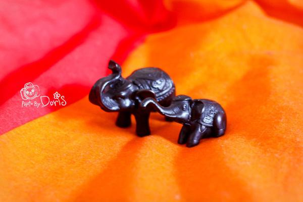 我最喜歡這對大象母子.jpg