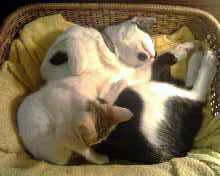 大貓小貓睡一起