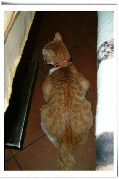 店裡遇見的小貓miu miu