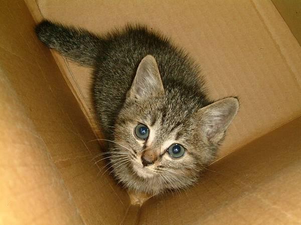 放在箱子裡玩