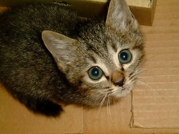我最喜歡小灰的大眼睛
