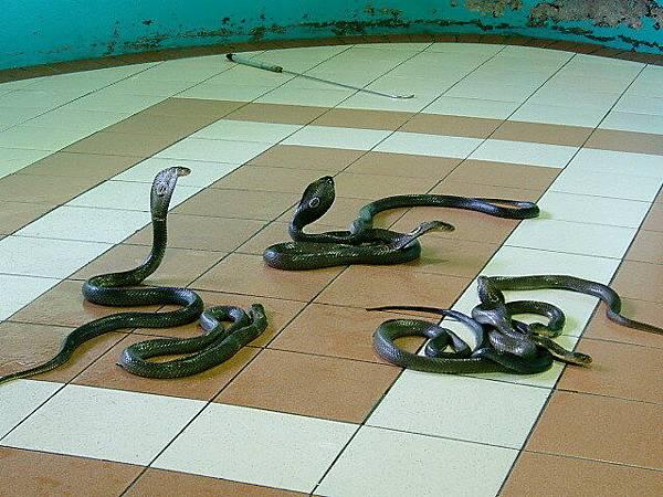 毒蛇研究中心