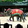 大象超可愛~很調皮~