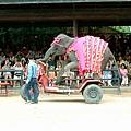 大象騎腳踏車