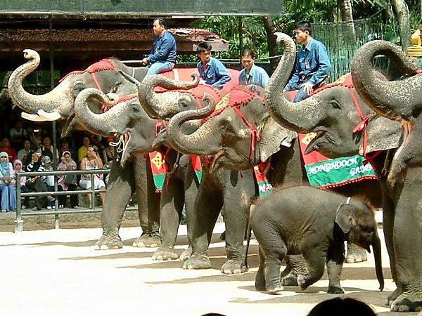 小象好可愛