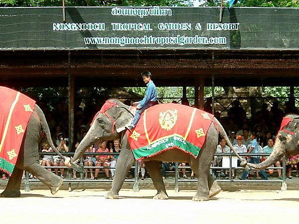 大象拉尾巴排隊走