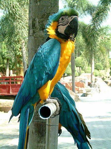 好美的鸚鵡