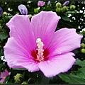 梨大內各處都種滿了花和樹