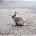 前往旅館CHECK-IN遇到小野兔