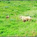 今天看見比較多熊~