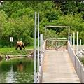 才過橋就有一隻棕熊
