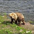 這隻熊一直不太敢下手