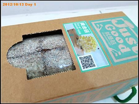 黃金菇養成紀錄:Day 1