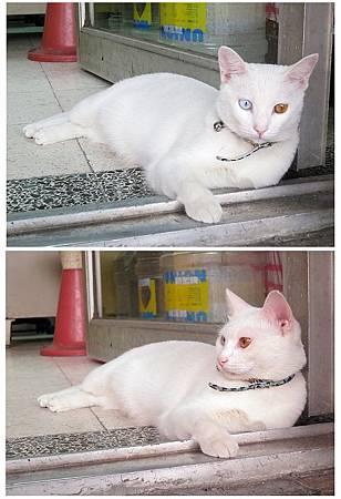 2012/10/15路上遇到小白貓