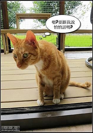 2013/07/18貓極簡