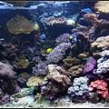 熱帶繽紛的魚缸