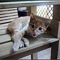 另一角落發現小橘貓
