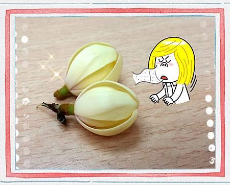 2014/10/28含笑花